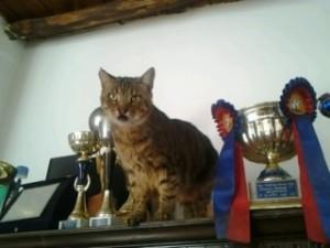 LOLLO tra i trofei