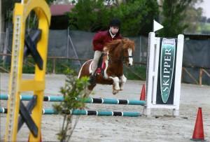 ELVIS pony shetland