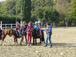 sociale 15.11 pony