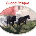 Vorresti avere un cavallo tutto tuo da coccolare con cui fare splendide passeggiate? Ecco i nostri Cavalli disponibili in affidamento per le passeggiate !